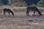 Corolla Wild Horses 3