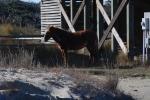 Corolla Wild Horses 5