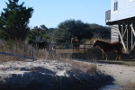 Corolla Wild Horses 6