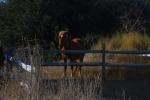 Corolla Wild Horses 7