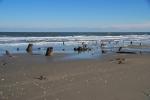 Stumps on Beach 2
